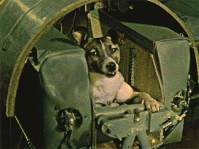 Laika.-First-dog-in-space.-No-provisions-were-made-for-her-return-and-she-died-there.