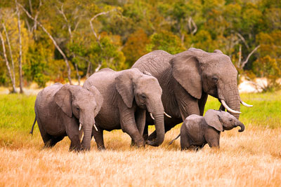 african-elephant-kenya-res_1031864