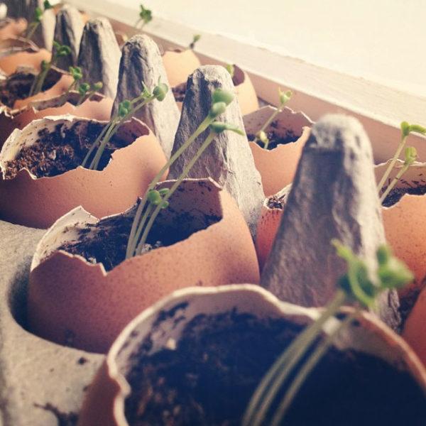 yumurta-kabugundan-neler-yapilir--6752690
