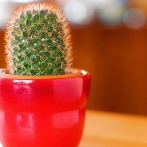kaktussss-min